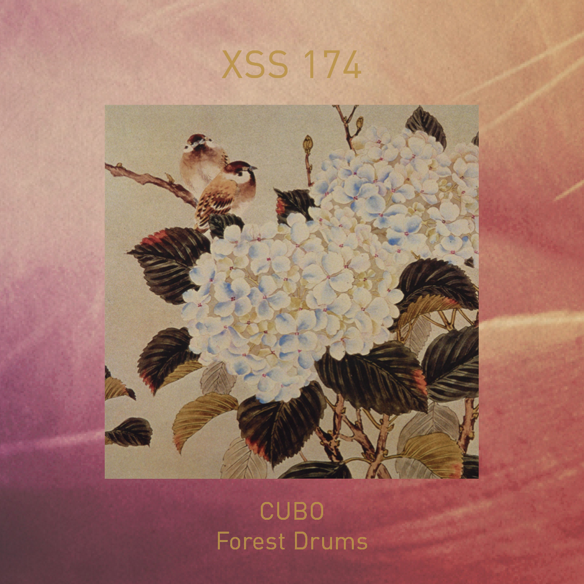 XSS174 | Cubo | Forest Drums